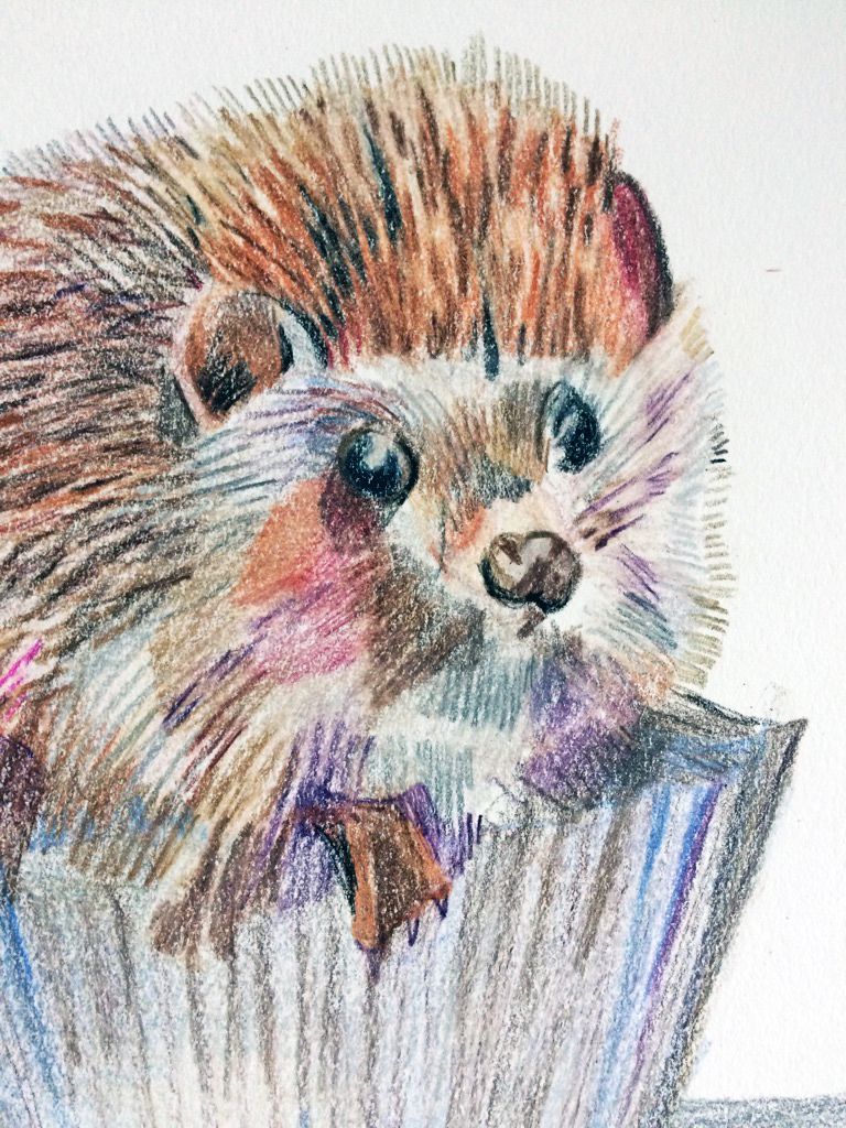 hedgehogcloseup.jpg