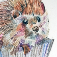 Hedgehog-Cupcake Drawing